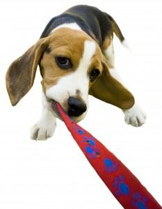 Puppy Fundamentals @ Golden Arena Lounge