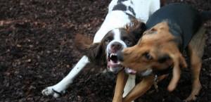 Reactivity Dog Training