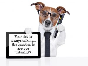 The Art of Dog Language @ Chasin Tails Dog Care Center