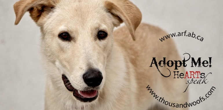 DOG OF THE WEEK October 8, 2014