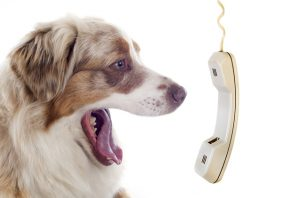 The Art of Dog Language @ Chasin Tails Dog Care Center